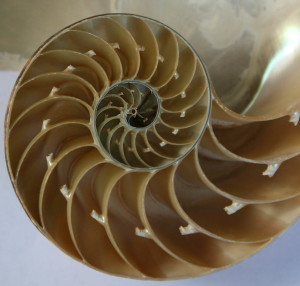 The sequence of Fibonacci numbers in nature