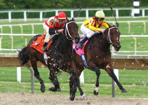 Understanding Horse Racing terminology