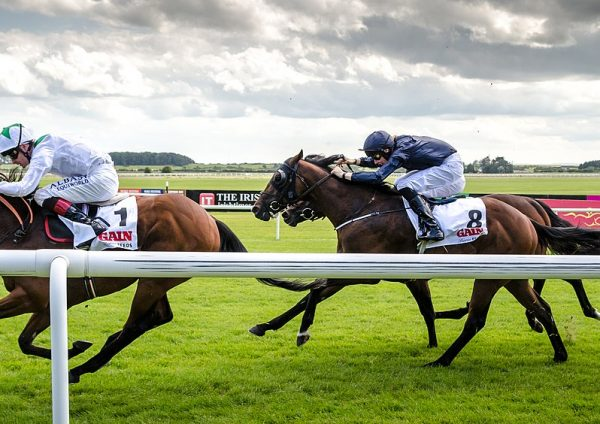 How Does the Draw Affect a Flat Horse Race?