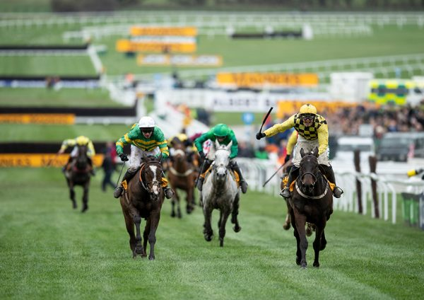 cheltenham festival betting guide