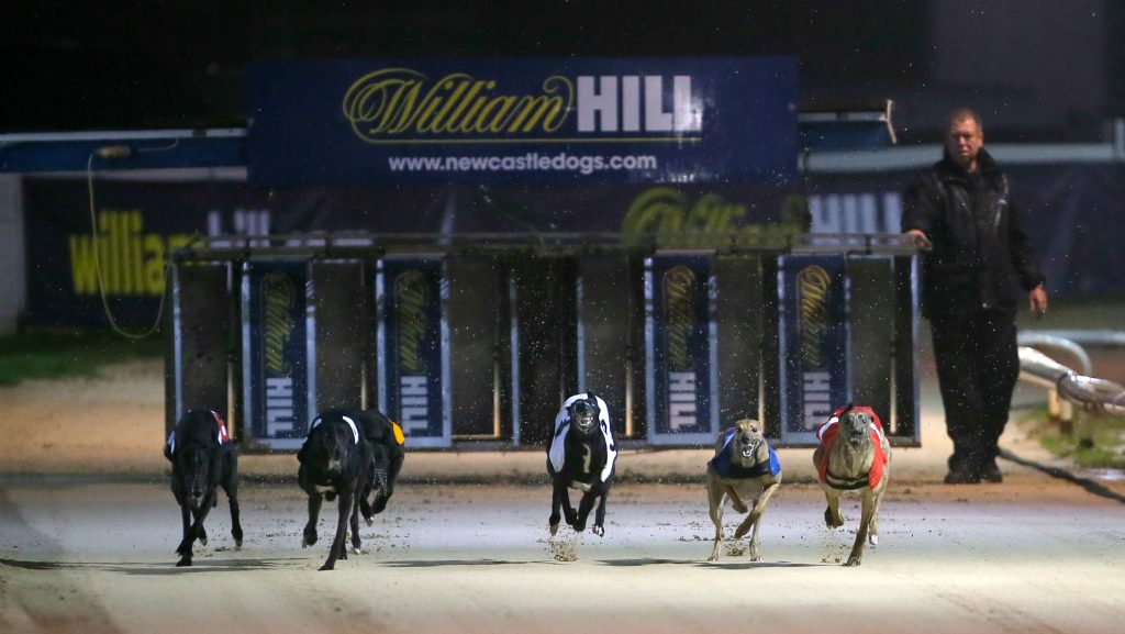 live greyhound racing betting tv william hill